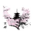 Sakura póló