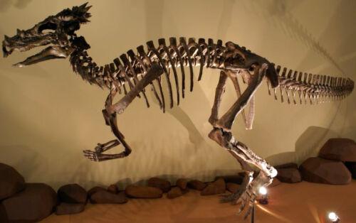 dracorec japán dinoszaurusz mitologia mondák