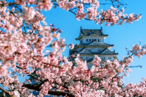 himeji, japan, sakura
