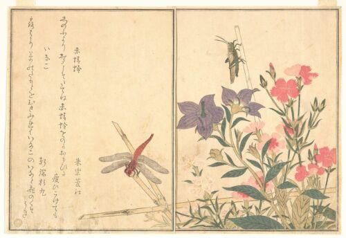 japán szitakötő szimbolika