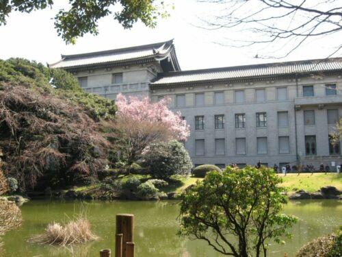 ueno sakura park hanami tokio japan