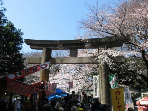 tokio ueno park sakura hanami japan legjobb helyek hanamira