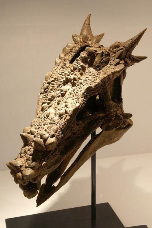dracorex japán sárkány mitologia mondák doniszaurusz
